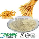 wholesale 100% natrual top quality NON-GMO food grade vital wheat gluten price