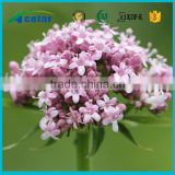 Alibaba Trade Assurance of plants extraction valerian root tea extract