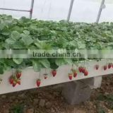 Agricultural Hydroponics U type trough growing system