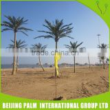 Environmental Friendly plastic fake outdoor Artificial Coconut Palm Tree Decorative Artificial Plant