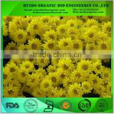 Chrysanthemum extract / chrysanthemum indicum extract