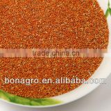 sell chinese 2013 new crop red millet in husk