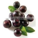 GMP Standard Natural Acai Berry Extract 20:1