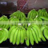 Class A Premium Quality Ecuador Origin Fresh Green Cavendish Banana Satisfaction Guarantee