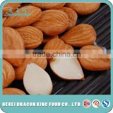 Raw bulk sweet apricot seeds type in apricot kernel, apricot seeds using for nuts, cake, chocolate food companies