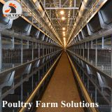 Layer chicken cage with full automatic equipment