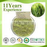 Chinese Manufacturer Low Price High Nutrition in Bulk Free Sample Organic Barley Grass Powder