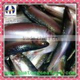 frozen whole sardines fish(sardinella longiceps)