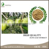 Hot Selling products Olive Leaf Extract Powder