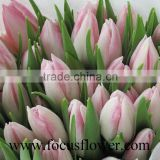 With High quality and grade real touch Tulip for holiday parties with long time flowers fresh From China