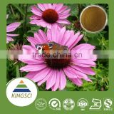 GMP Standard wholesale coneflower cichoric acid 2%~7%, echinacea purpurea extract in bulk, chicory root extract inulin