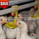 TA NO.1 A type frame poultry farm high quality day old broiler chicks for sale
