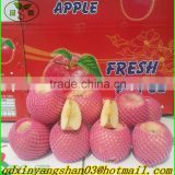 Wholesale price apple fruit from China/Fresh Apples