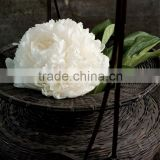 Pure natural White Peony Root Extract Paeoniflorin 10%-98%