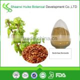 100%pur buckwheat extract flavonol50% HPLC Natural Reduce Blood Pressure plant extract