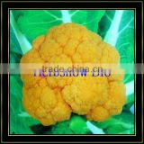 F1 Hybrid Cauliflower seeds/broccoli seeds