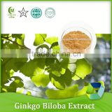 reliable supplier health care product organic ginkgo biloba extract 24%6%