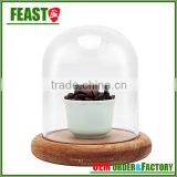 high borocilicate clear glass bell jar with wooden base mini glass dome