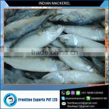 High Quality Dried Mackerel Fish for Sale at Best Price