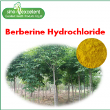 Berberine Hydrochloride 97% powder for medicine