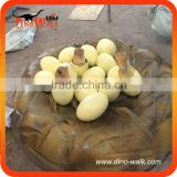 Hatching dinosaur egg from Dino Factory