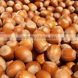 Raw Hazelnut in Shell