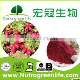 Beet root juice powder GMP KOSHER HALAL