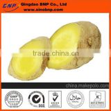 GMP&Kosher Qingdao BNP Organic Ginger Extract rich in Gingerol