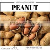 High quality cashew nut, bag 25kg (+84 933 66 5346 whatssap)