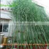 SJLJ013369 artificial bamboo plant / fake plastic bamboo stick / artificial plant for garden fence decoration