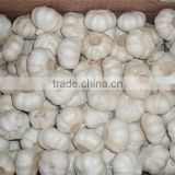 fresh high qualtiy garlic/ white natural frozen garlic china