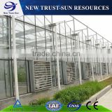 Professional glass greenhouse project for commercial greenhouse with good cooling system