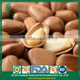 Wholesale Solar Energy Price Open Pine Nuts in Shell