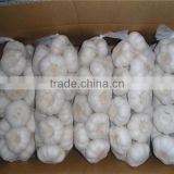 Hot selling garlic shampoo for hair loss High Quality garlic ginger grinding machine peeled vacuum packed garlic
