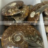 Natural Polished Ammonite Snail Crystal Fossils For Sale