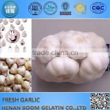 Chinese Fresh Garlic 2015