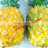 VIET NAM FRESH pineapple