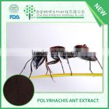 Polyrhachis ant powder,polyrhachis ant extracts,polyrhachis ant powder extracts with super quality and low price