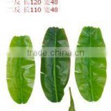 monstera leaves,dried banana leaf ,foliage tree leaves decoration