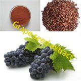 Factory direct nutrition fortifier grape seed extract