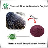 Manufacture Supply Natural Acai Berry Extract Powder