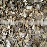 Eucalyptus wood chips Viet Nam