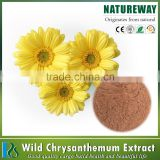 2017 best selling Wild chrysan the mum extract Chrysanthemum indicum L. (Fam. Compositae)
