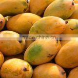 Inquiry About mangoes