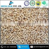 Sesame Seed Buyers For Indian Country