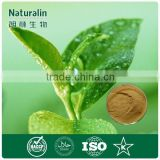 Water soluble Natural Chinese Green Tea Powder/ Health Benefits, Health Care