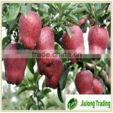 Fresh red delicious fruit huaniu apple <#80--#175>