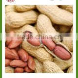 roasted peanut in shell on sale