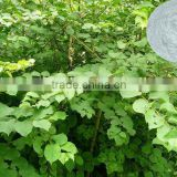 Natural Herbal Plant Resveratrol Extract Bulk White fine Powder Food and pharmaceutical grade