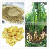 Organic Dried Ginger Root Powder